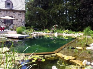 type 3 natural swimming pool