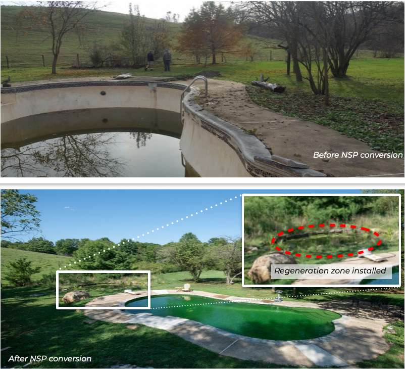 Conversion to a BioNova® Natural Swimming Pool can be done on most existing swimming pools.